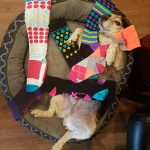 Compression stockings for dogs ?